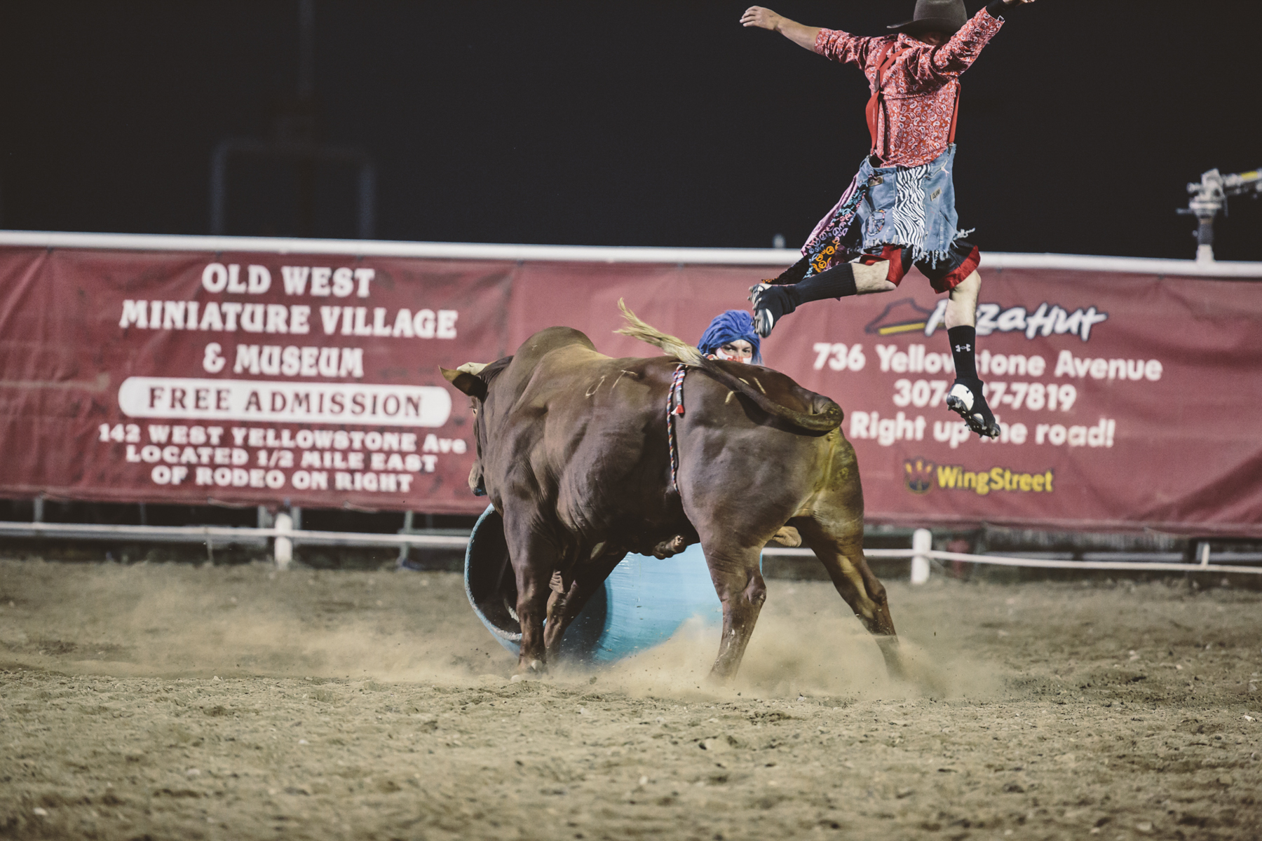 Bull Bucking on Rider at a Rodeo